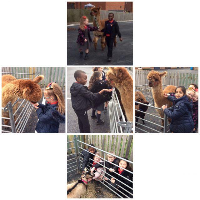 2BY Animal farm