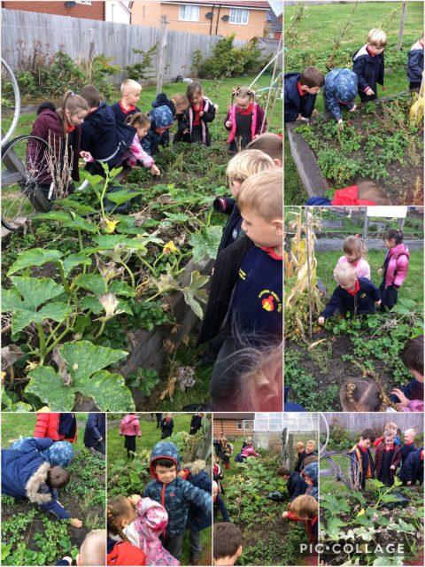 1S - Weeding the garden