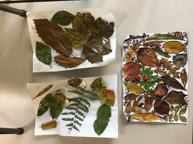 4.1 Autumn Collage additional homework